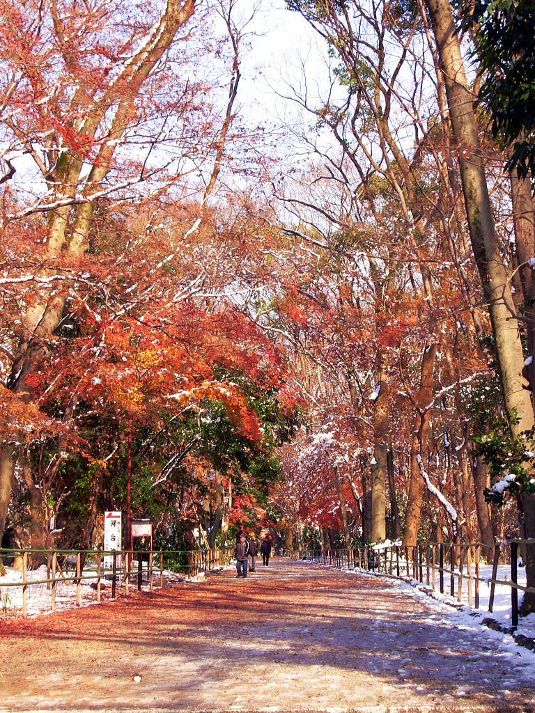 紅葉と雪の淡い京宴