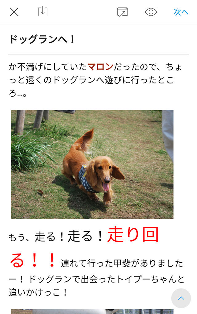 ss_editor