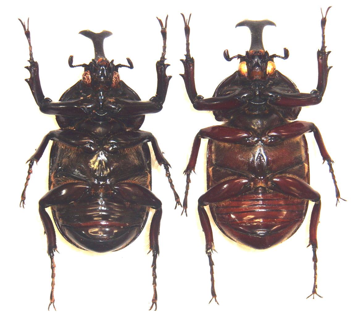 今日の昆虫:2016年05月