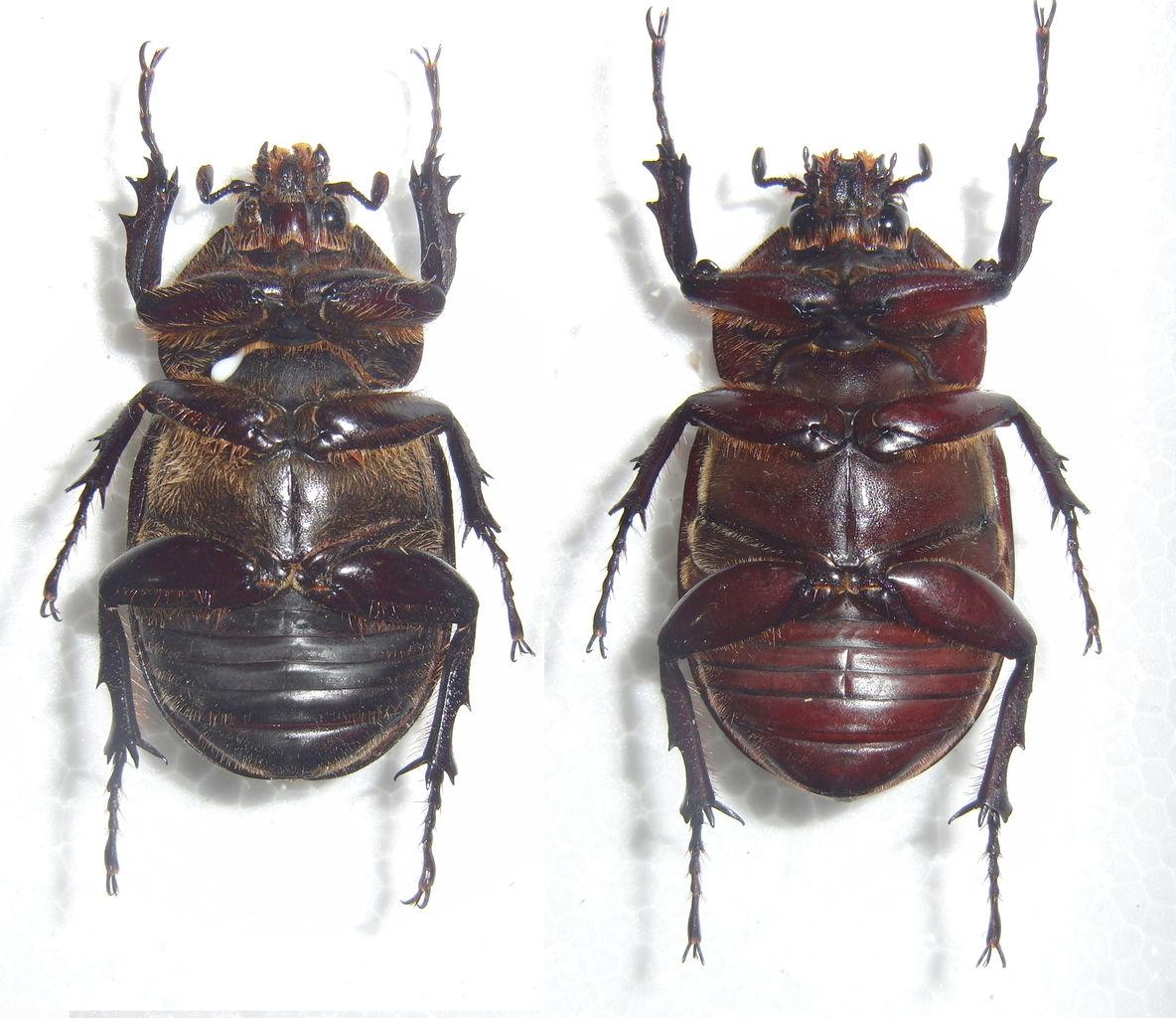 今日の昆虫:2015年09月