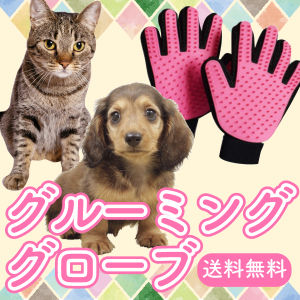 愛犬とハッピー! / 2018.01.04