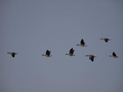 <Lullaby of Birdland>�