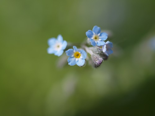 庭の隅っこに咲いているちっちゃなお花