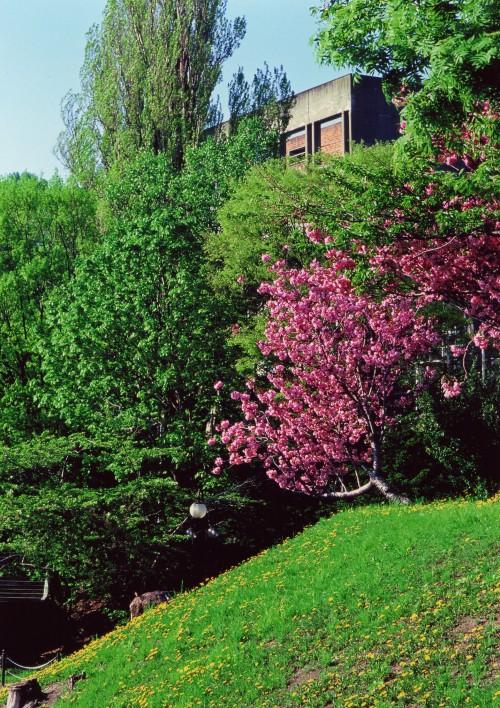 小樽公園〜裁判所からの風景�