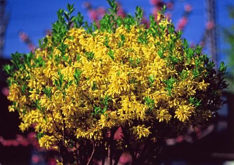 黄色い花@小公園