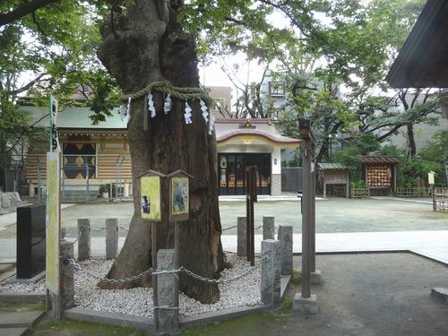 新田神社ご神木