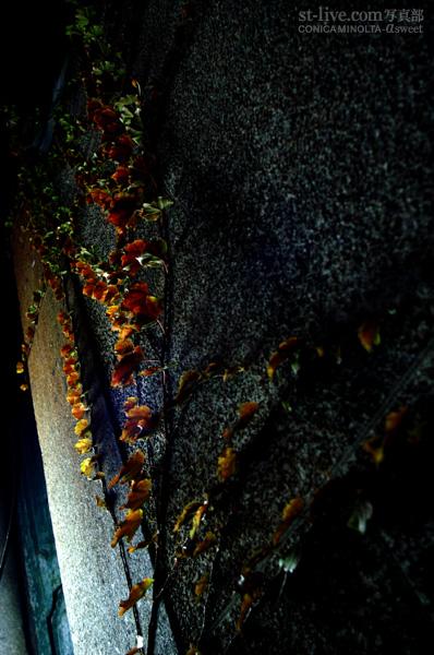 雨の壁4848