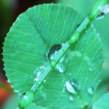 After rain, 10-17-2016 092