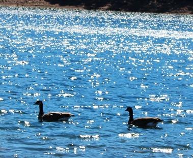 Lake Siskiyou, 9-29-2016 288