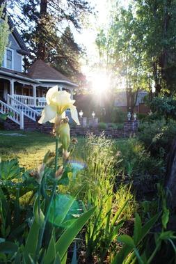 Morning Garden,6-2-2017 026