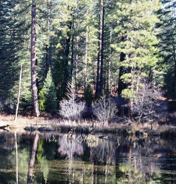 50 doc. McCloud creek  12-21-2018 153