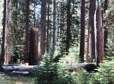 Shasta Forest, 9-24-2016 036