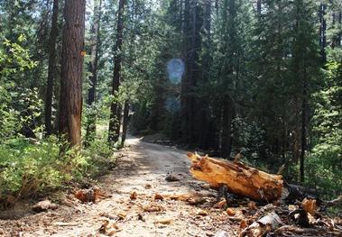 Wild Forest, 5-26-2017 371