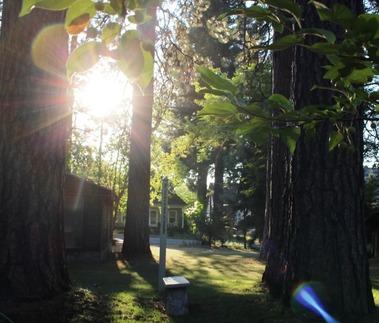 SBI garden, 8-19-2016 084