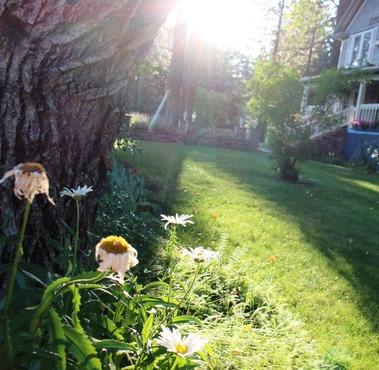 SBI  garden, 8-17-2016 169