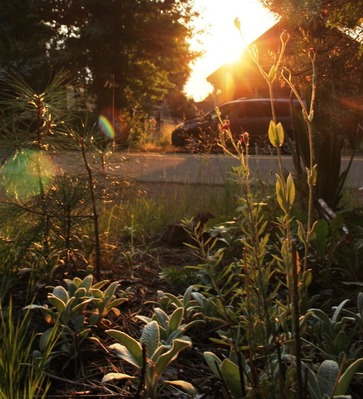 SBI Morning Garden, 7-30-2017 041