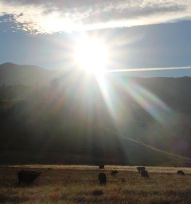 Shasta, 11-8-2016 432