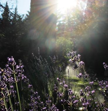 SBI garden, Sunset, 7-1-2016 181