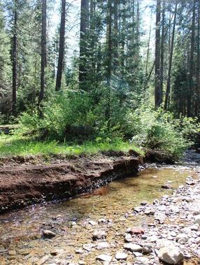Wild Forest, 5-26-2017 146