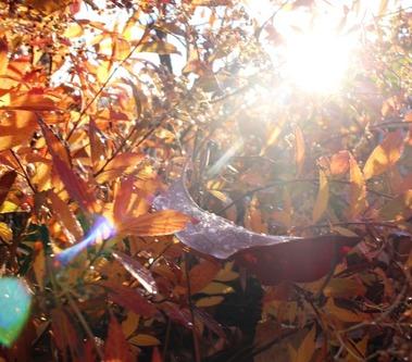 Fall Garden, 11-13-2016 089