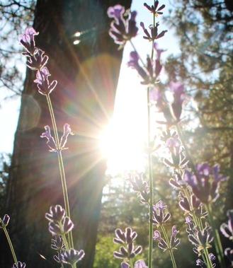 SBI garden, Sunset, 7-1-2016 171
