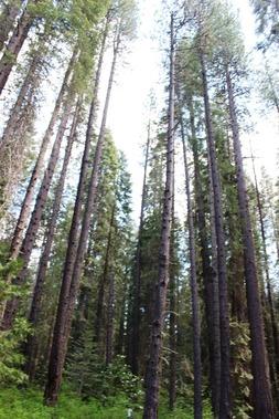 Wild Forest, 5-26-2017 088