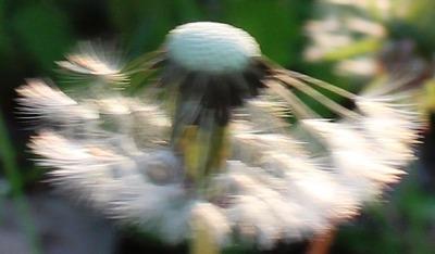 Morning Garden, 5-6-2016 065