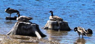 Lake Siskiyou, 9-29-2016 244