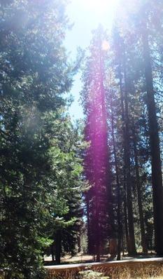 Shasta Forest, 9-24-2016 009