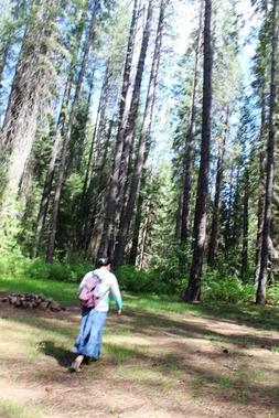 Wild Forest, 5-26-2017 051