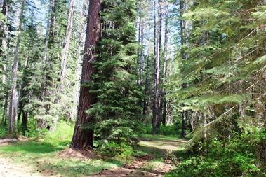 Wild Forest, 5-26-2017 018