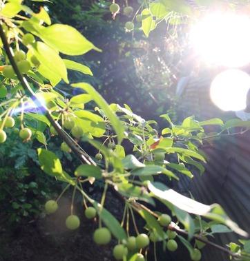 SBI garden,8-10-2016 205