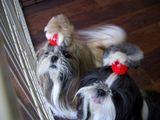 看板犬のベルタとシータ