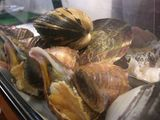 本日入荷の新鮮魚介類