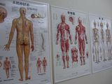 神経・筋肉・骨の表