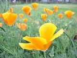 花が咲くために・・