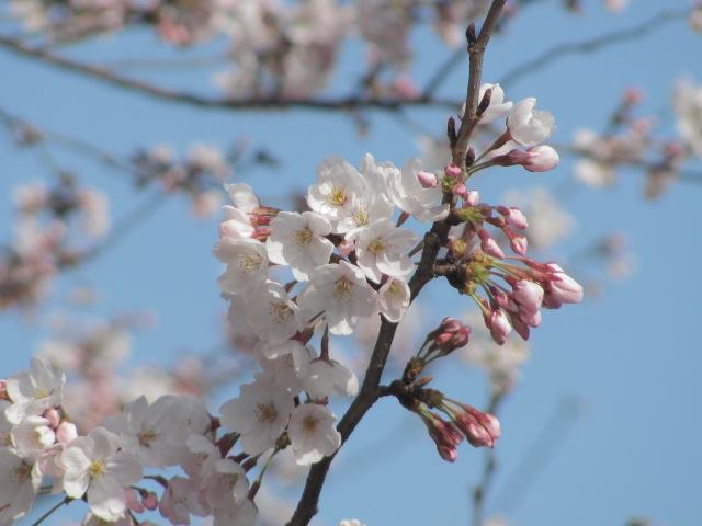 【入会金&4月会費割引き】春の割引キャンペーン☆【ストライプル早稲田8周年記念フェア】