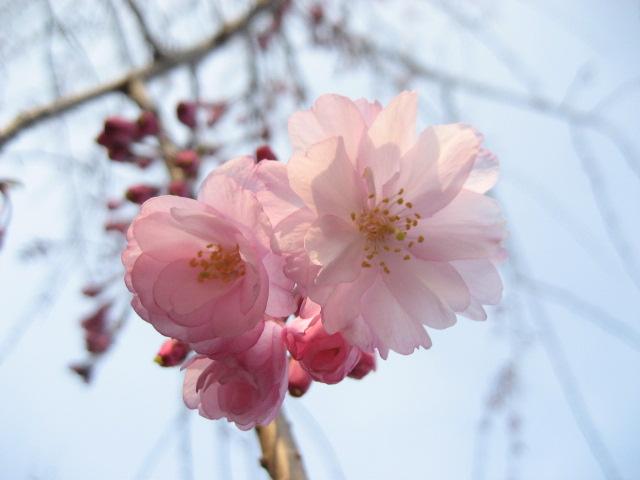 春の特別キャンペーン開催中☆【入会金割引・3月分会費無料】