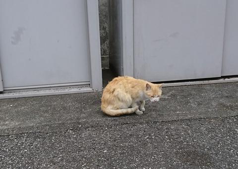 ネコ  人慣れ