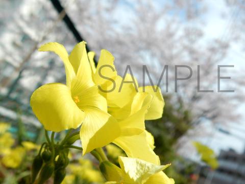 yellow flowerSAMPLE