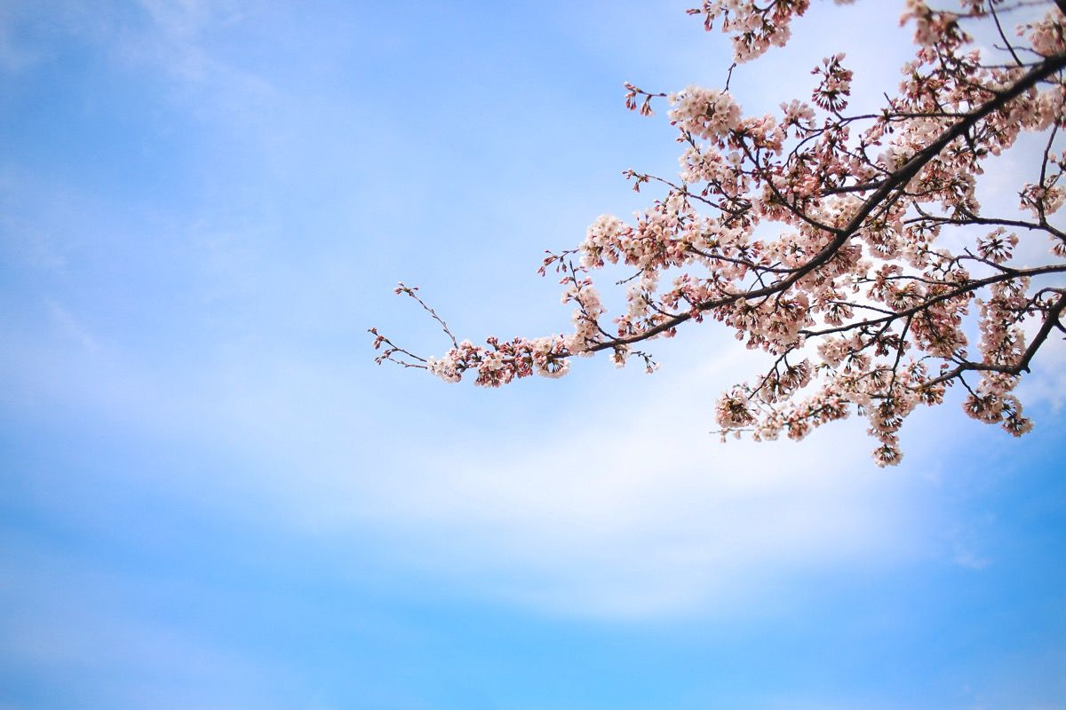 Photo 052