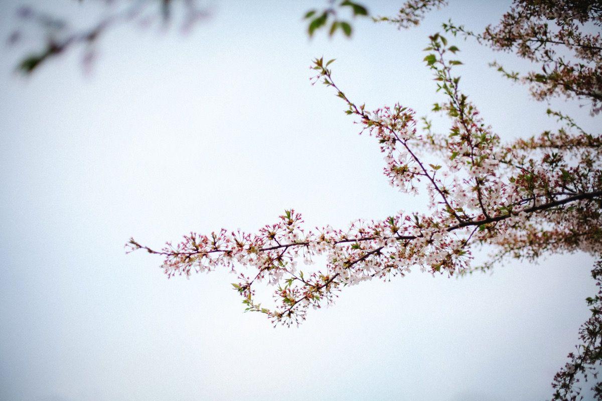 Photo 015