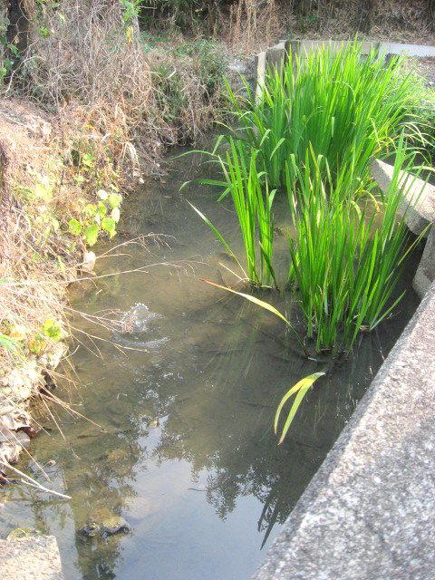 ゆうみん池