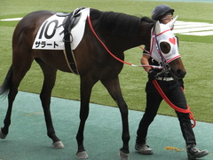 20170611 東京6R 2歳牝馬メイクデビュー サラート 09