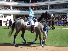 20180304 中山5R 3歳牝馬未勝利 プラチナベール 11
