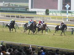 20150222 東京5R 3歳メイクデビュー シンディーア 11