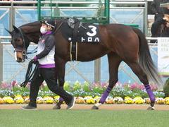 20190323 中山9R ミモザ賞 3歳牝馬(500) トロハ 03