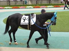 20151010 東京4R 3歳上障害未勝利 サウンドアラムシャ 03