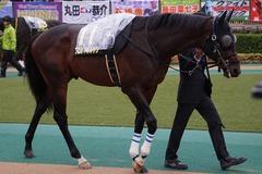 20191123 東京11R キャピタルS(L) プロディガルサン 09