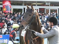 20151227 中山2R 2歳メイクデビュー ダーニングイーグル 11